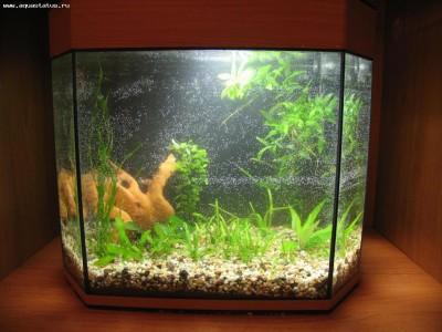 Коряга в аквариуме - IMG_3466.JPG