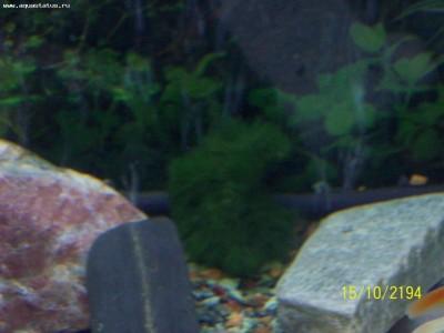 катается по аквариуму - 100_0929.JPG