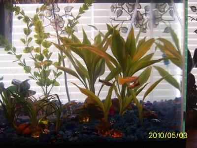 Мой первый аквариум 45 литров Love1987  - PIC_0005.JPG