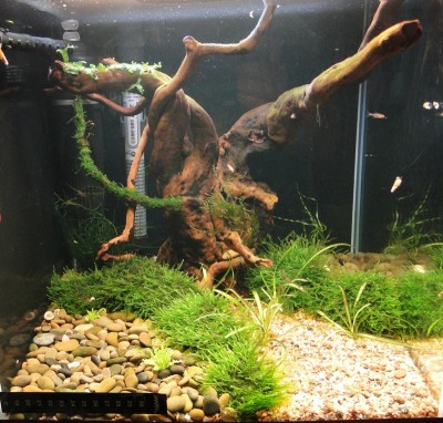 Ещё один аквариум 30 литров Студентка  - мох 009.jpg