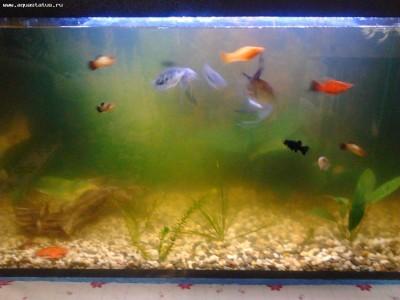 Вода в аквариуме зеленая - способы борьбы с цветением воды - Фото0393.jpg