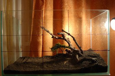 25.01.2009 Сделали ланшафт из Aqua soil, установил коряги - 14.jpg