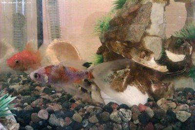 Рыбка - IMAG0067.jpg