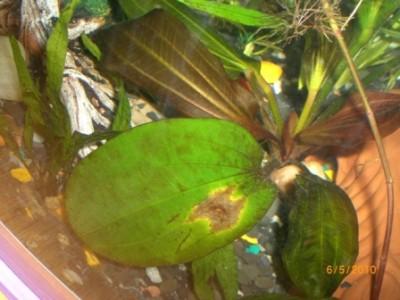 Какая-то водоросль? - CIMG2625.JPG