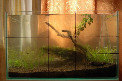 Посадил немного травки и залилил воды. Скажу сразу некторая трава для быстрого поедания нитратов:  - 15.jpg