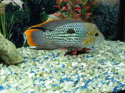 Мой аквариум 180 литров Sserg-83  - SDC15418.JPG