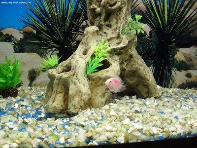 Мой аквариум 180 литров Sserg-83  - SDC15388.JPG