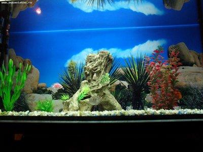 Мой аквариум 180 литров Sserg-83  - SDC15383.JPG