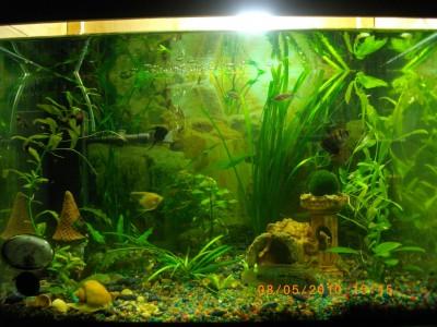 Мой аквариум 50 литров nikitos  - IMGP0487.JPG