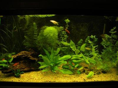 Мой аквариум 200 литров Dasha  - 15.JPG