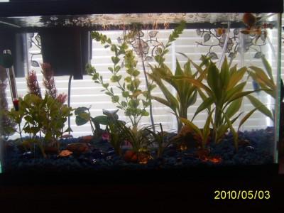 Первый аквариум. - PIC_0003.JPG