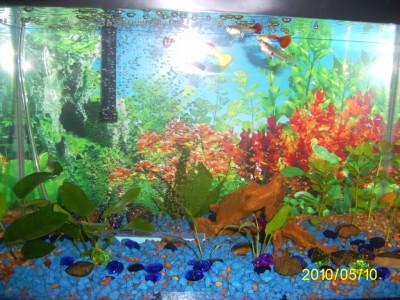 Этот же аквариум но переделанный - PIC_0010.JPG