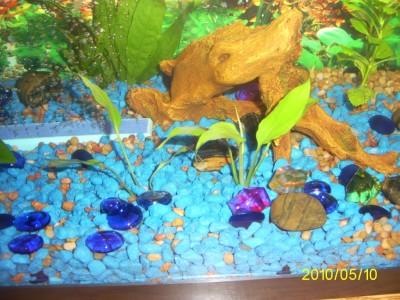 Мой первый аквариум 45 литров Love1987  - PIC_0022.JPG