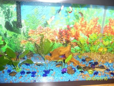 Мой первый аквариум 45 литров Love1987  - PIC_0020.JPG