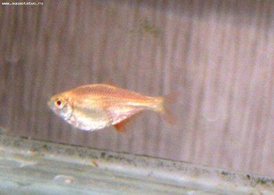 Помогите опознать рыбку опознание рыб  - IMG_4680.jpg