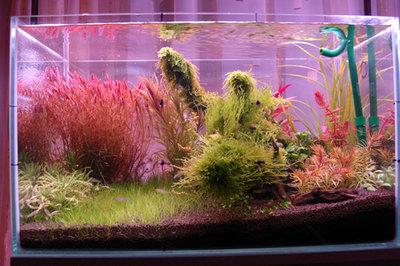 29.03.2009 Уже похоже на аквариум - 28.jpg