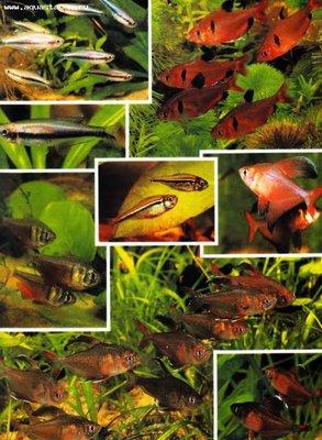 Помогите опознать рыбку опознание рыб  - Безымянный_2.jpg