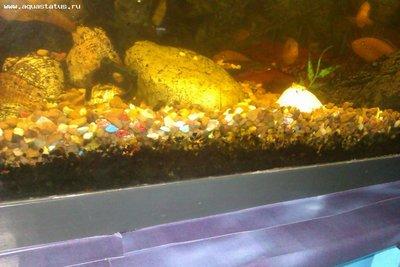 Как поменять воду в очень запущенном аквариуме - IMAG0362.jpg