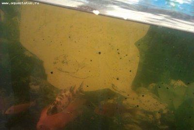 Как поменять воду в очень запущенном аквариуме - IMAG0364.jpg