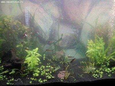 Мутная вода в аквариуме, муть в аквариуме - DSC01121.JPG