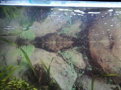 Мутная вода в аквариуме, муть в аквариуме - DSC01125.JPG