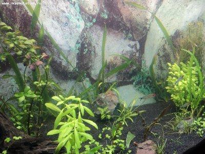 Мутная вода в аквариуме, муть в аквариуме - DSC01123.JPG