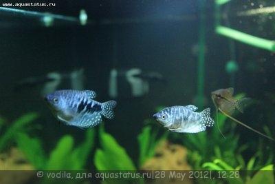 Мой аквариум 200 литров vodila  - IMG_0420.JPG
