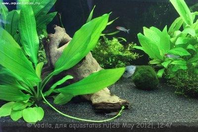 Мой аквариум 200 литров vodila  - IMG_0700.JPG