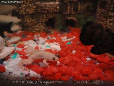 Хочу большой аквариум 980л. Как же менять воду? - DSC05633.JPG