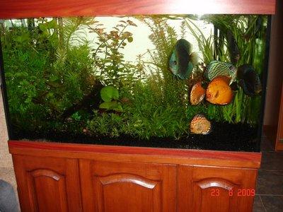 Мои аквариумы Алексей7  - DSC06259.JPG