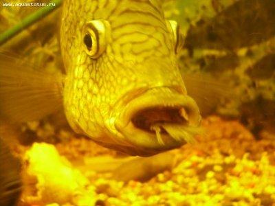 так это выглядит - Fish.jpeg