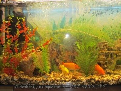 Мой аквариум 125 литров Deshant  - IMG_0281.JPG