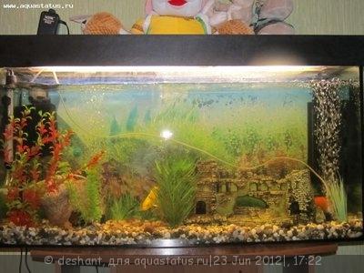 Мой аквариум 125 литров Deshant  - IMG_0280.JPG
