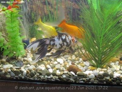 Мой аквариум 125 литров Deshant  - IMG_0283.JPG