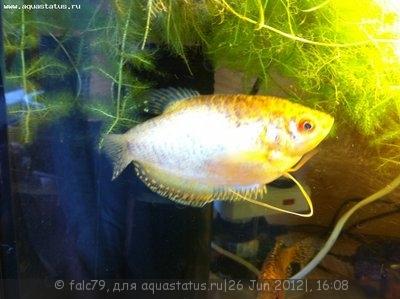 Помогите опознать рыбку опознание рыб  - IMG_0320.JPG