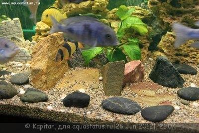 Новый аквариум 450 литров kapitan  - IMG_3652.JPG
