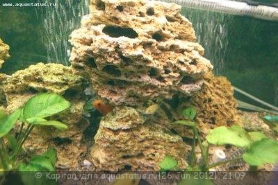 Новый аквариум 450 литров kapitan  - IMG_3657.JPG
