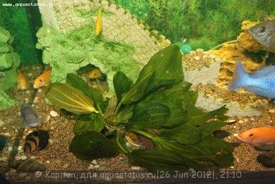 Новый аквариум 450 литров kapitan  - IMG_3659.JPG