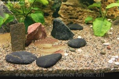 Новый аквариум 450 литров kapitan  - IMG_3660.JPG