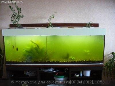 Мутная вода в аквариуме, муть в аквариуме - P1060273.JPG