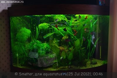 Мой аквариум - душевное равновесие в уголке 190 литров Smelter  - 9OzhjRkkx_w.jpg