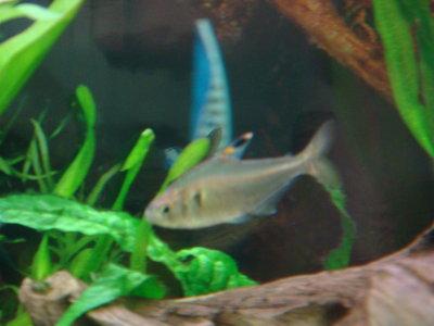 Помогите с названием Рыб - Aquarium 131.jpg