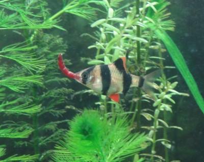 Мой аквариум 100 литров НастенА  - 121.jpg