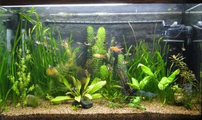 Мой аквариум 100 литров НастенА  - 048.jpg