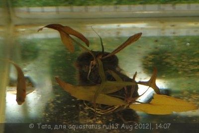 Аквариумные растения - опознание растений. - IMG_2051.JPG