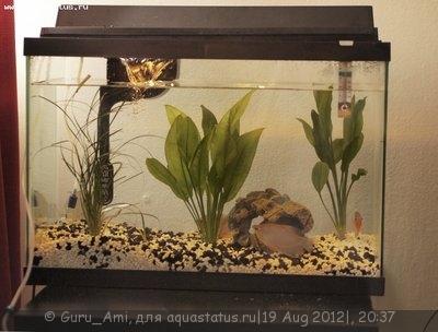 Вот как фильтр выглядит в аквариуме - Forum_1.jpg
