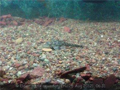 Помогите опознать рыбку опознание рыб  - 005fd0606232.jpg