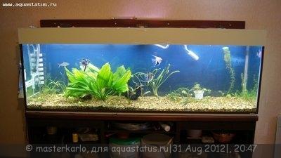 Чёрная борода в аквариуме - DSC05974.JPG