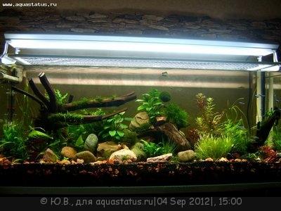 Запуск аквариума в картинках - 1-й показ.JPG
