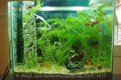 Светодиодное освещение аквариума - 03.jpg